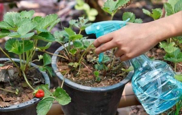 Фитоверм инструкция по применению для комнатных растений