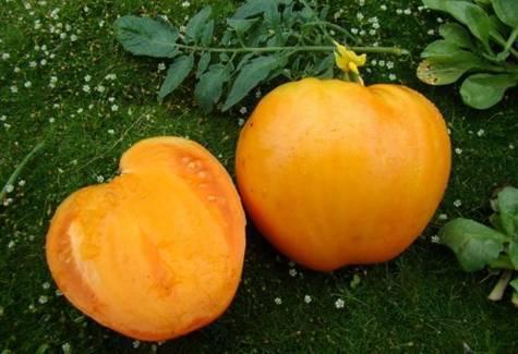Томат медовый гигант: отзывы, фото, урожайность, характеристика и описание сорта