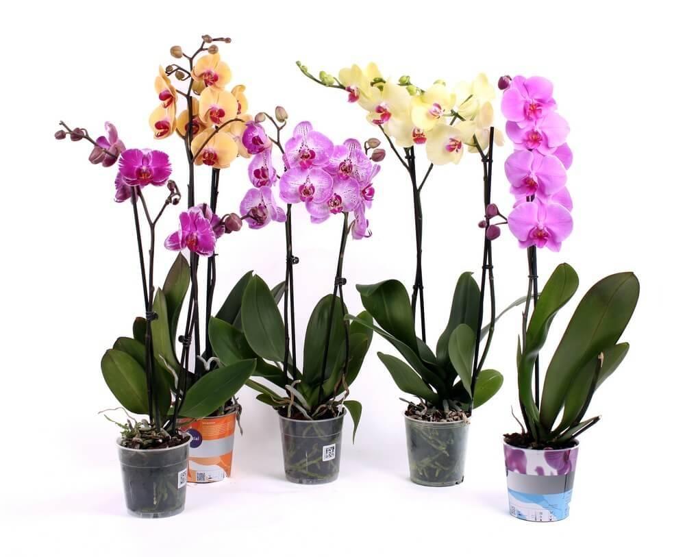 Агриколь, покон и прочие удобрения для орхидей: когда и как применять?