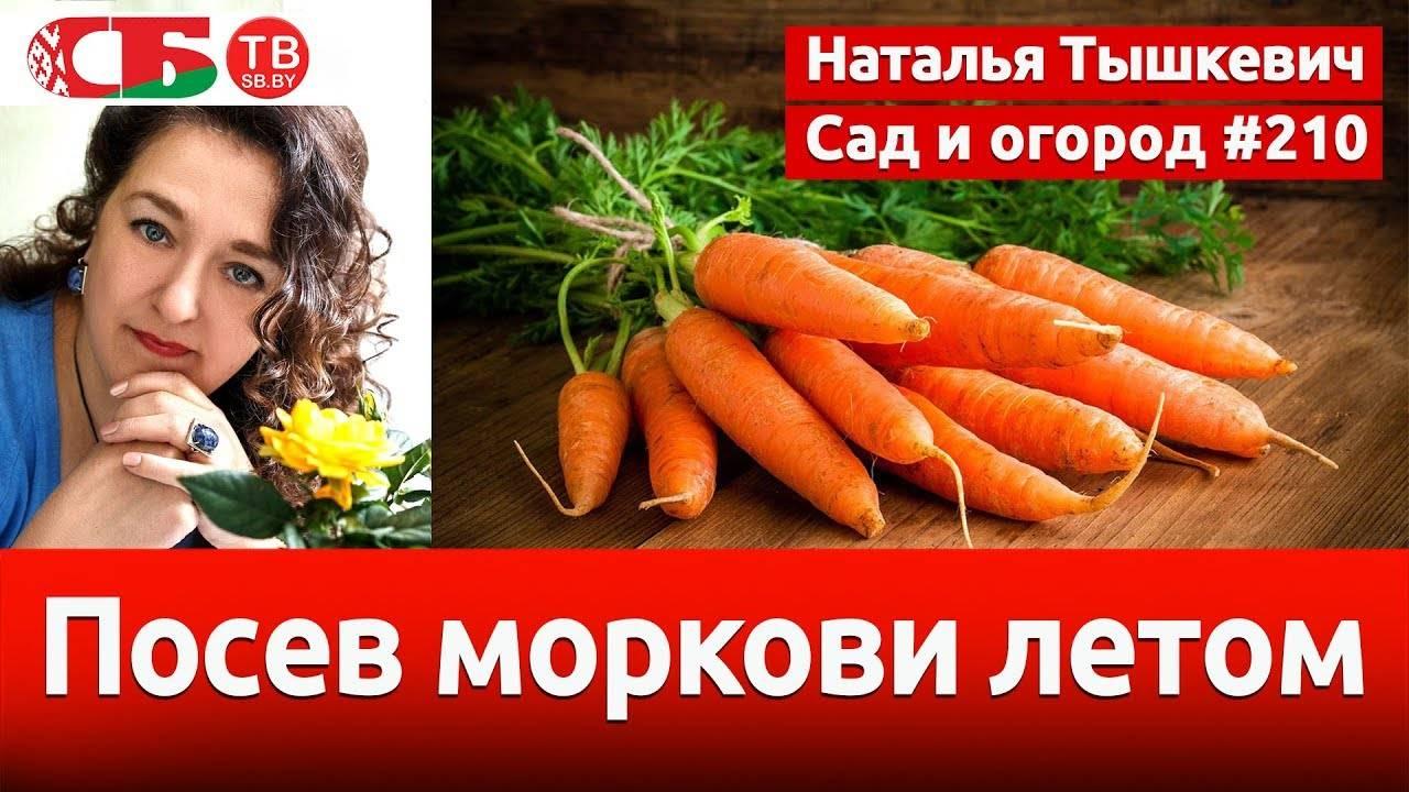 Посадка моркови в яичные ячейки: как сажать, видео