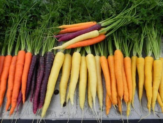Полезные свойства и вред желтой моркови