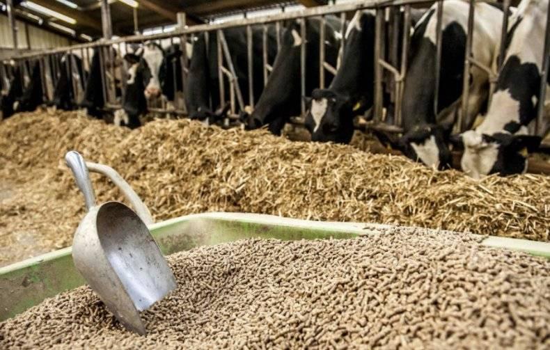 Все о комбикорме для крупного рогатого скота
