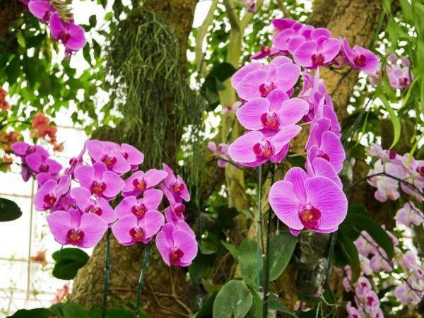 Самые красивые сорта орхидей в мире - их фото и описание