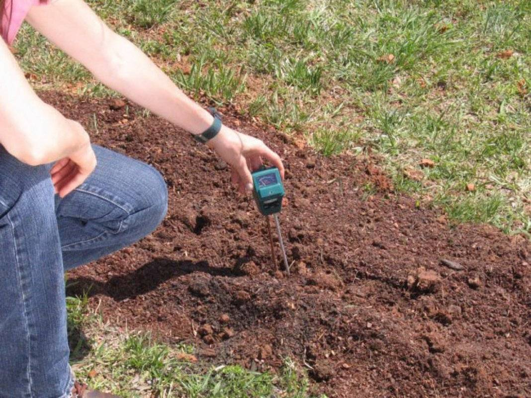 Какую почву любят огурцы: оптимальный состав, кислотность, влажность и температурный диапазон почвы для выращивания огурцов (105 фото)