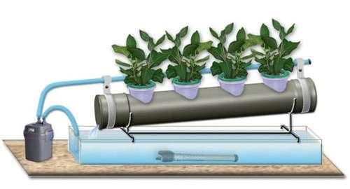 Почему гидропоника эффективнее, чем грунтовое выращивание?