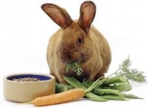 Витамины и кормовые добавки для животных | витаминно-минеральные комплексы nita-farm