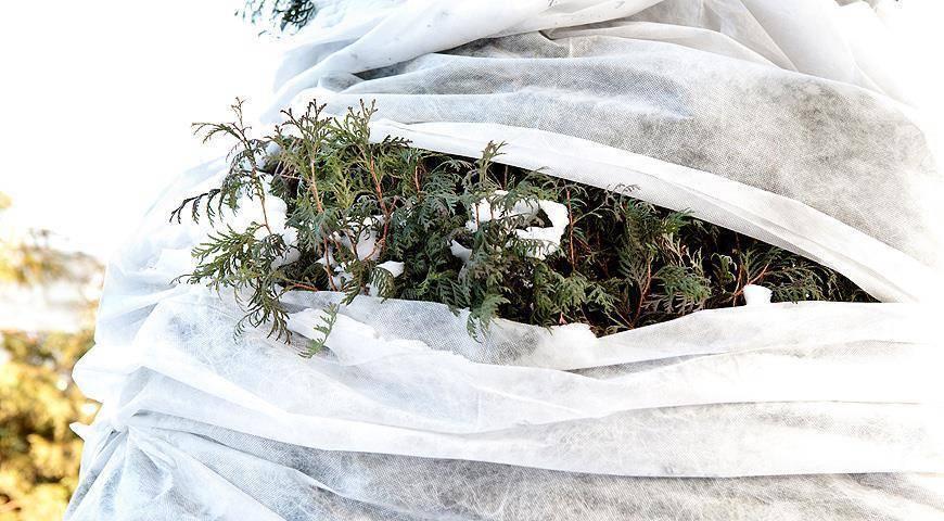Укрывной материал для роз. устанавливаем дуги   дачная жизнь