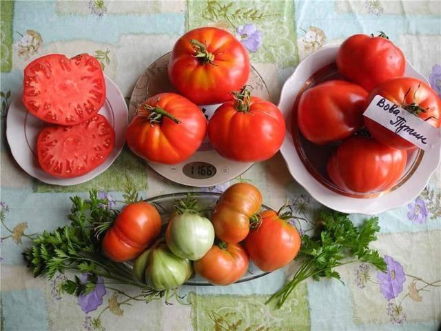 """Томат """"паленка"""": описание, урожайность, фото, отзывы"""
