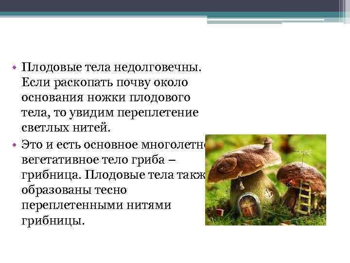 Описание высших и низших грибов