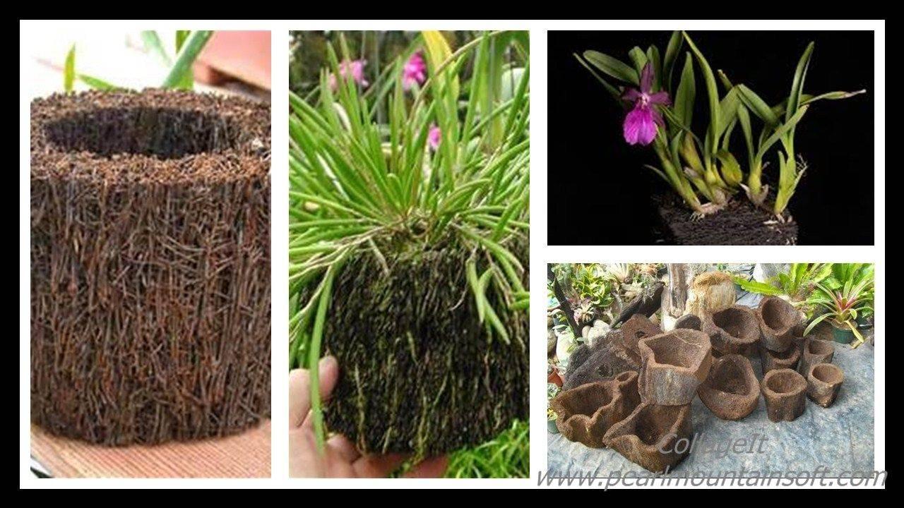 Виды папоротников: описание каждого вида, особенности, выращивание и уход - sadovnikam.ru