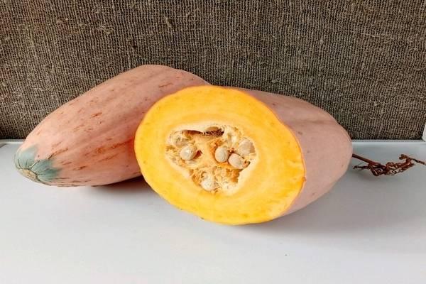 Описание длинноплодной тыквы розовый банан и агротехника выращивания