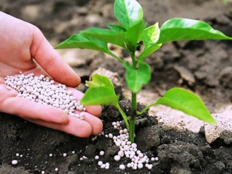 Мочевина удобрение. применение на огороде. как использовать? инструкция