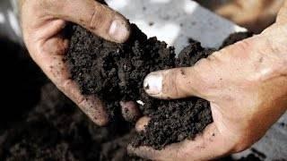 Как посадить осенью клубничные усы: наглядная инструкция