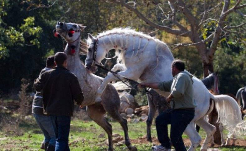 Спаривание (случка) лошадей: описание, процесс