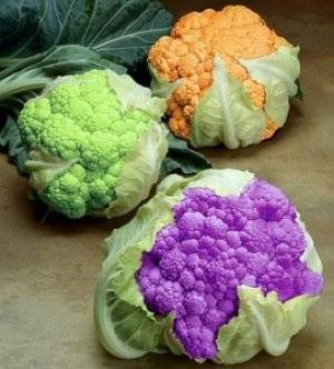 Посадка цветной капусты: как сажать семенами в открытый грунт и в теплицу, сроки, схемы, фото и видео
