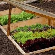 Теплые грядки и удивительный огород игоря лядова: отзывы с фото и видео