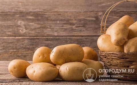 Правила длительного хранения картошки в квартире