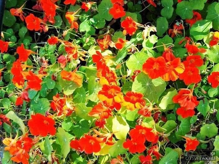 Вьющиеся цветы и растения для сада и дачи: названия и фото
