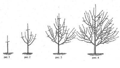 Как вырастить хурму из косточки: можно ли получить саженец из семени, что делать дальше, будет ли дерево плодоносить в открытом грунте в саду, а также фото на даче