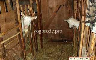 Послед у козы - что делать, если не отходит плацента 2021