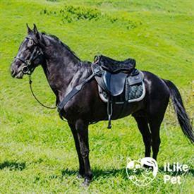 Кабардинская порода лошадей: фото, история и описание