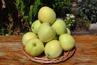 Колоновидные яблони — сорта для северо-запада