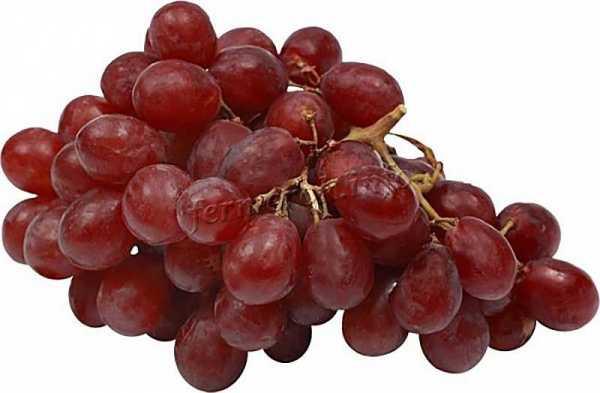 Полезные свойства винограда без косточек и особенности применения