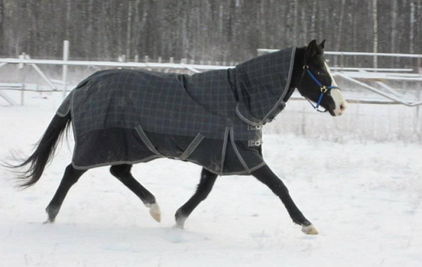 Попона для лошади: как сшить своими руками, выкройка, фото