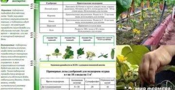 Внекорневая подкормка огурцов: сроки внесения, виды удобрений