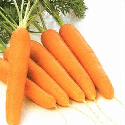 Сколько витаминов и пользы в моркови? — какие витамины?