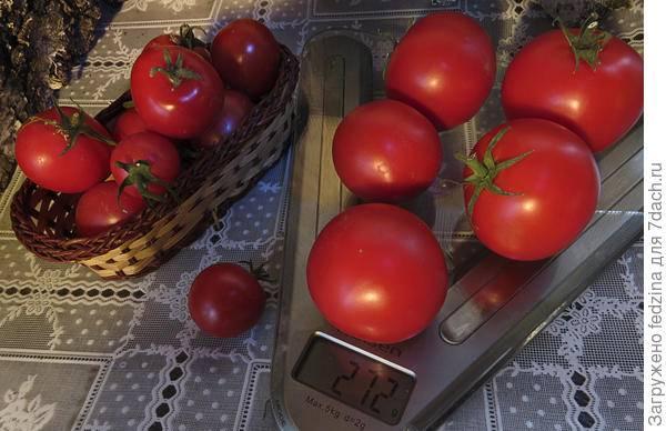Потрясающий томат японский карлик