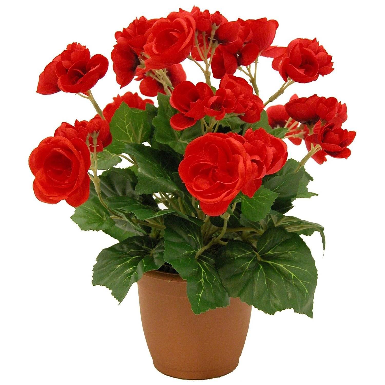 Неприхотливые комнатные цветы, цветущие круглый год | home-ideas.ru