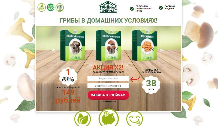 Бизнес идея для села: выращивание шампиньонов на продажу