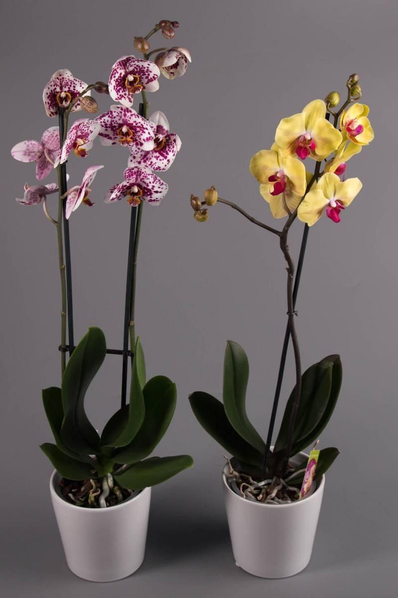 Как расшифровать этикетку на горшке с орхидеей