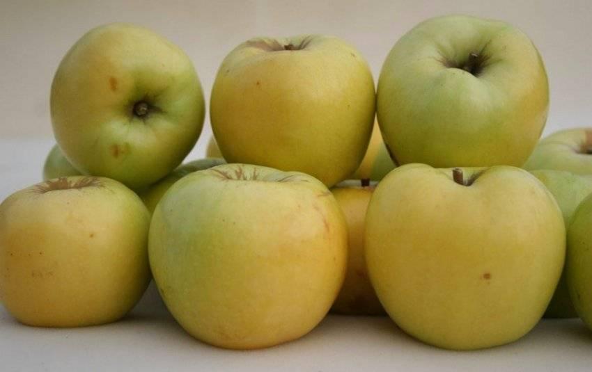 ᐉ можно ли заморозить яблоки на зиму в морозилке и как это сделать правильно? - orensad198.ru