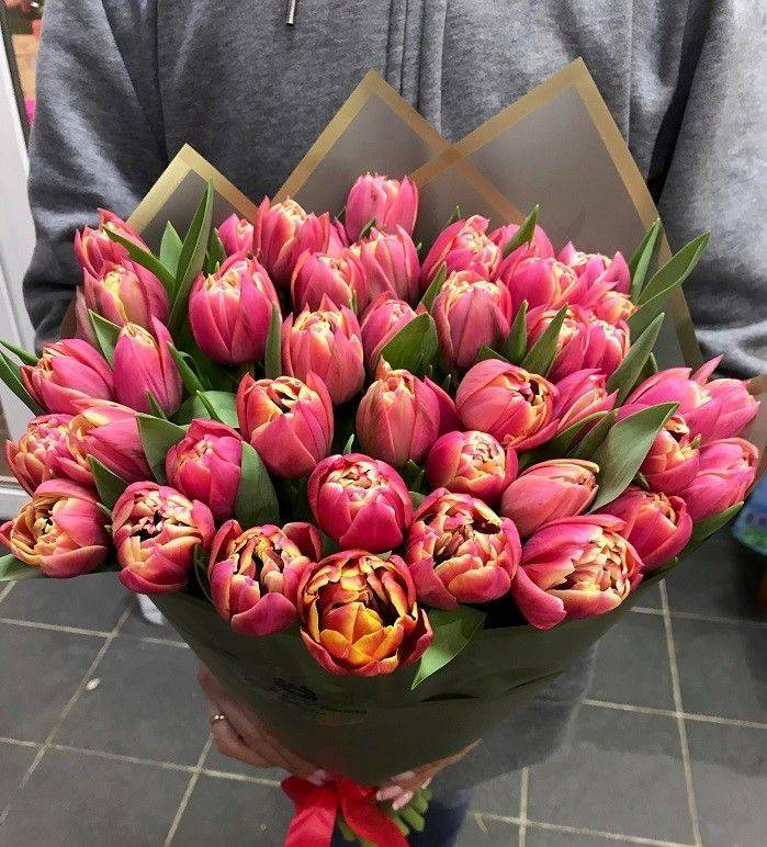 Попугайные тюльпаны (22 фото): особенности, сорта, правила посадки и ухода