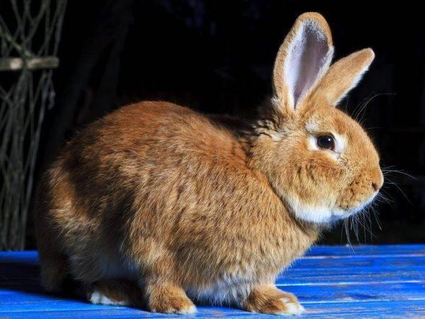 Можно ли давать кроликам крапиву