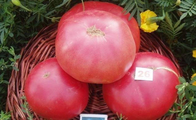 Обзор томатов гигантов – розовый, лимонный, медовый и другие
