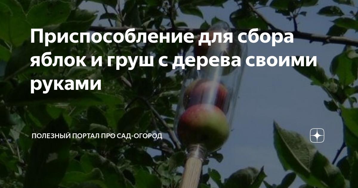Приспособление для сбора яблок: плодосъемник для сбора яблок с дерева и с земли. плодосборники с телескопической ручкой и другие варианты