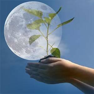 Лунный календарь огородника для большого урожая