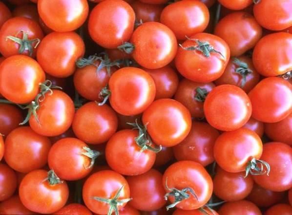 Характеристика и описание сорта помидоров Яблонька России