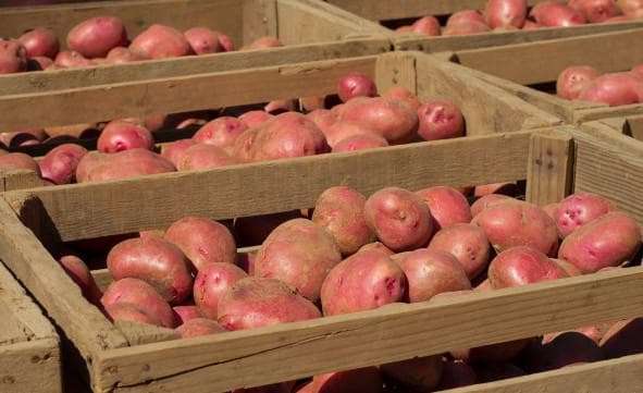 Как хранить зимой картошку на балконе: на открытом и закрытом, с подогревом и без, ошибки и важные нюансы русский фермер