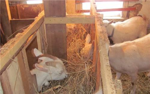 Сараи для коз (36 фото): размеры загонов, козлятник своими руками по чертежам, устройство стойла и проекты хлева. как построить пол?