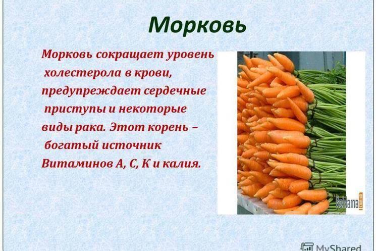 Морковь: это что за растение, однолетнее ли, какое у такого овоща соцветие, а также все о ней, история, род и семейство, описание видов, интересные сообщения