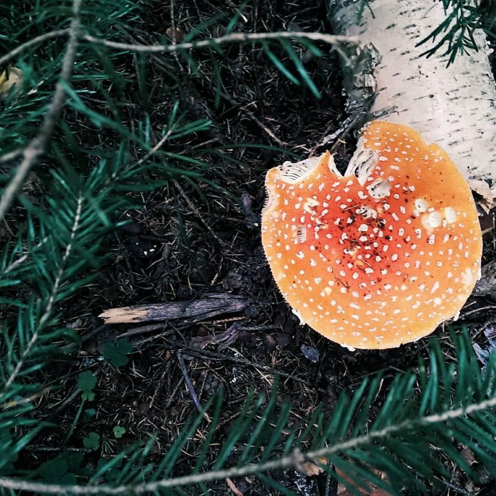 Витамины в грибах