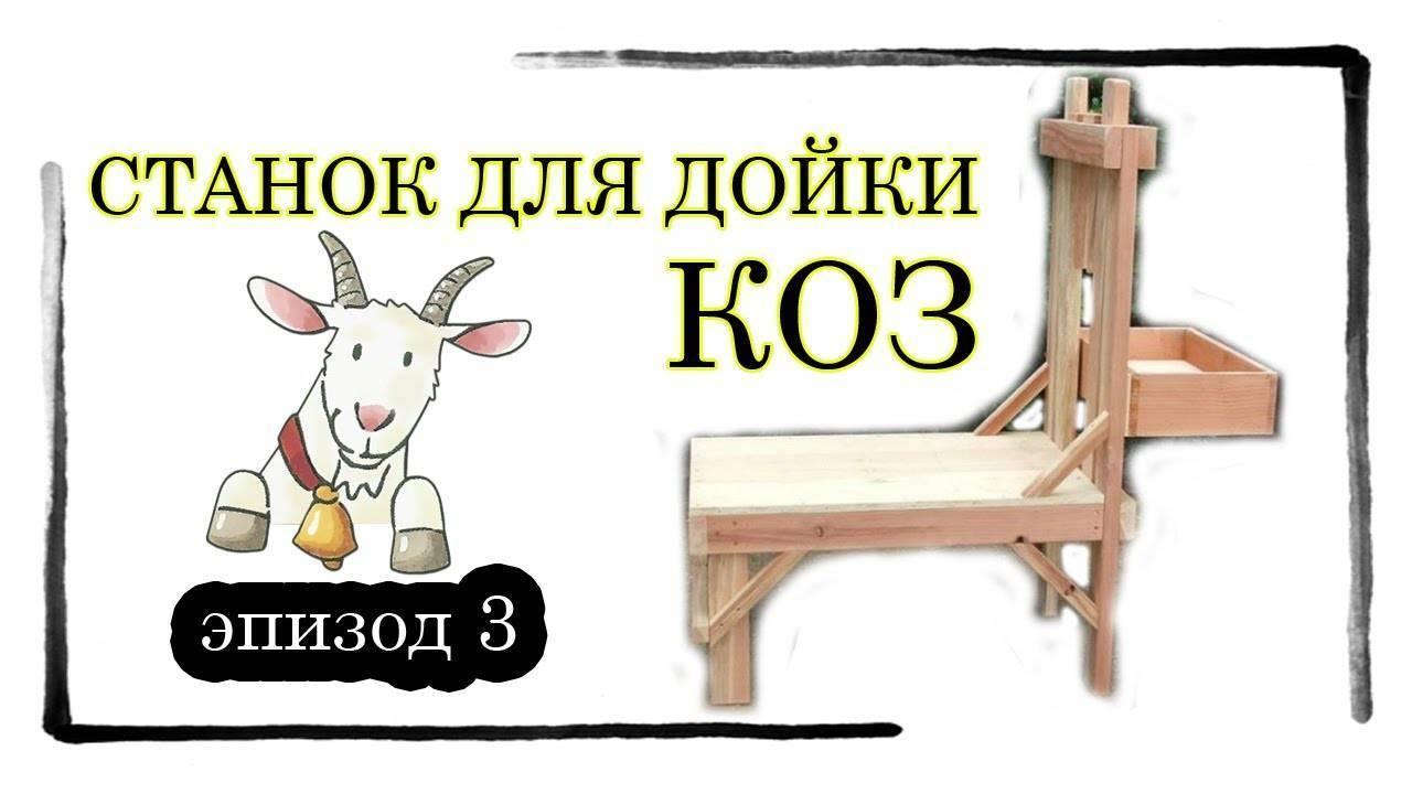 Преимущества станка для доения козы, пошаговый процесс изготовления