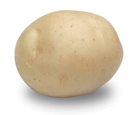 Картофель что это корни или плоды