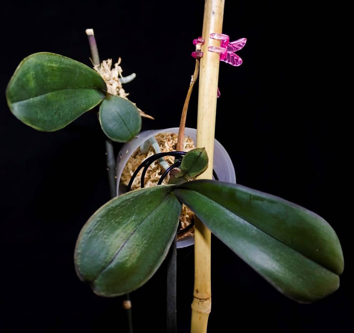 Болезни орхидей selo.guru — интернет портал о сельском хозяйстве