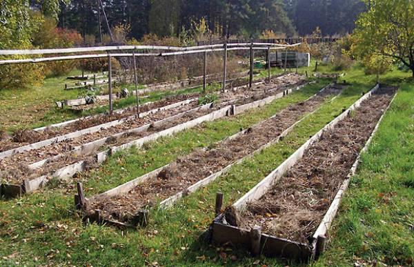 Грядка под чеснок: посадка, выращивание, уход, сбор урожая и хранение