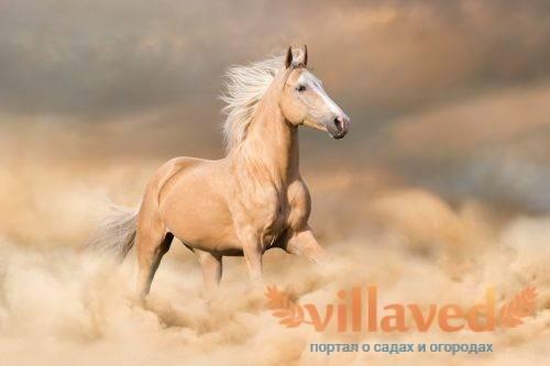 Лошадь рыжей масти: описание, генетика, фото | мои лошадки
